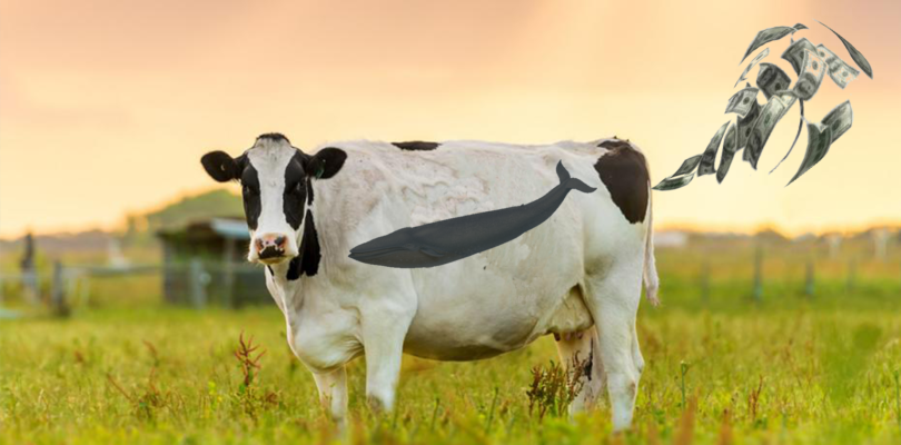 Cash Cow Business Model In Gaming And How To Break Free From It's Grasp.